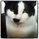 My Cat On Instragram